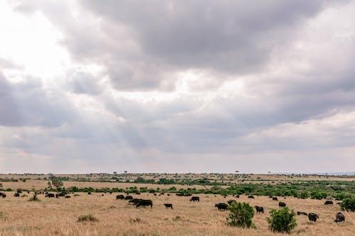 Imagine de stoc gratuită din acoperit de nori, animal, animale sălbatice