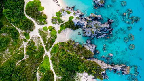 Aerial View of Green Trees and Blue Sea
