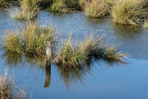 Free stock photo of betrachtung, biotop, gras