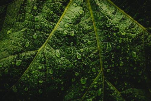 Immagine gratuita di bagnato, colore, crescere