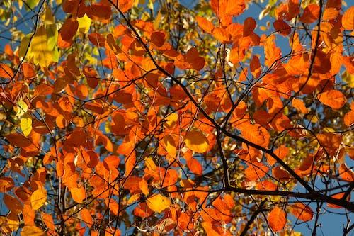 Základová fotografie zdarma na téma oranžová, podzimní listoví, příroda, větve