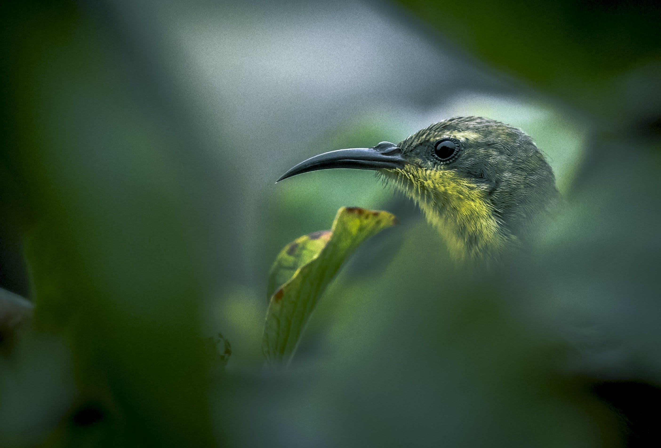 Gratis lagerfoto af sunbird