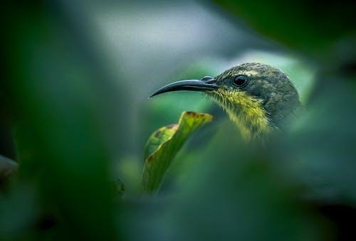 Δωρεάν στοκ φωτογραφιών με sunbird
