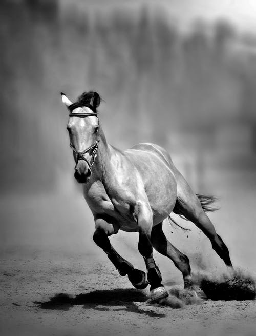 Grayscale Photo of Horse Running on Field