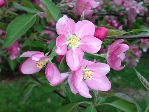 Foto d'estoc gratuïta de flor, flora, flors, planta