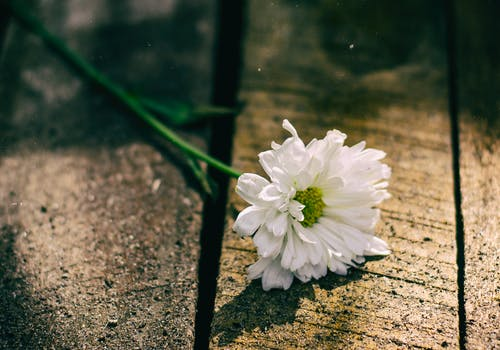 Free stock photo of lonely flower