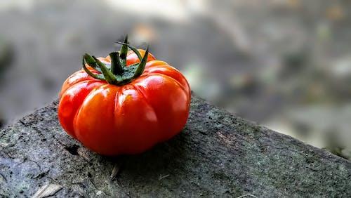 Základová fotografie zdarma na téma rajče