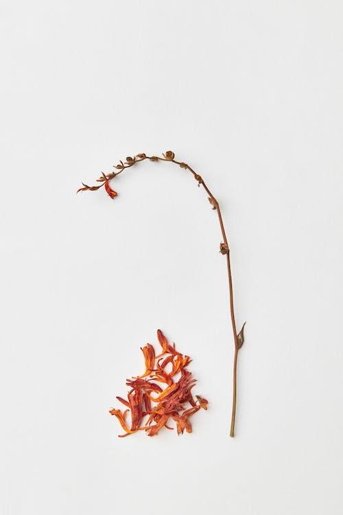 Kostenloses Stock Foto zu blütenblätter, getrocknete blumen, orange