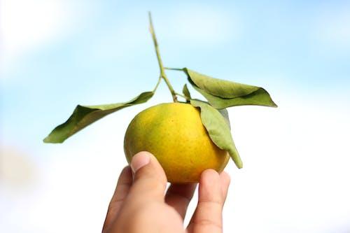 Person Holding Yellow Lemon Fruit