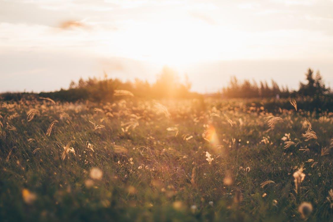 低角度拍攝, 傍晚的太陽, 光