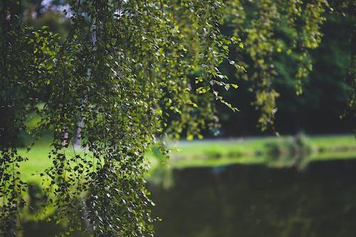 Fotos de stock gratuitas de agua, amanecer, árbol, crecimiento