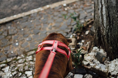 Free stock photo of dog, dog collar
