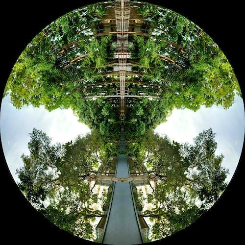 Free stock photo of greenery, mirror image, trees
