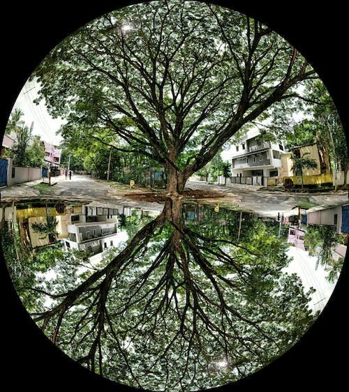 Free stock photo of mirror image, trees