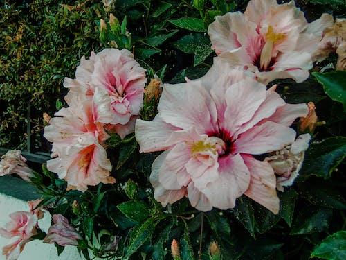 Бесплатное стоковое фото с hojas, jardin, jardín de flores, naturaleza