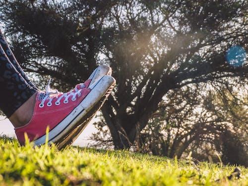 Бесплатное стоковое фото с arbol, converse, rayo sol, zapatillas rojas