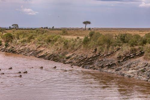 Foto d'estoc gratuïta de a l'aire lliure, Àfrica, animal