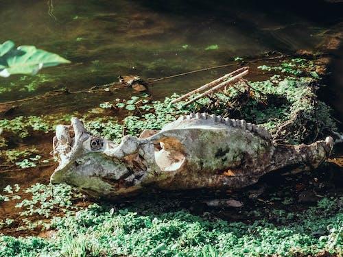 Бесплатное стоковое фото с craneo, naturaleza, агуа, агуа турбиа