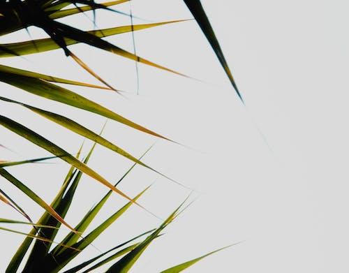 Бесплатное стоковое фото с arbol, arboles, cielo, cielo azul