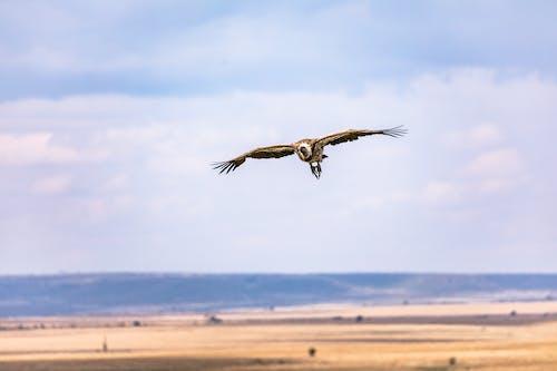 Δωρεάν στοκ φωτογραφιών με άγρια φύση, άγριος, αγροτικός