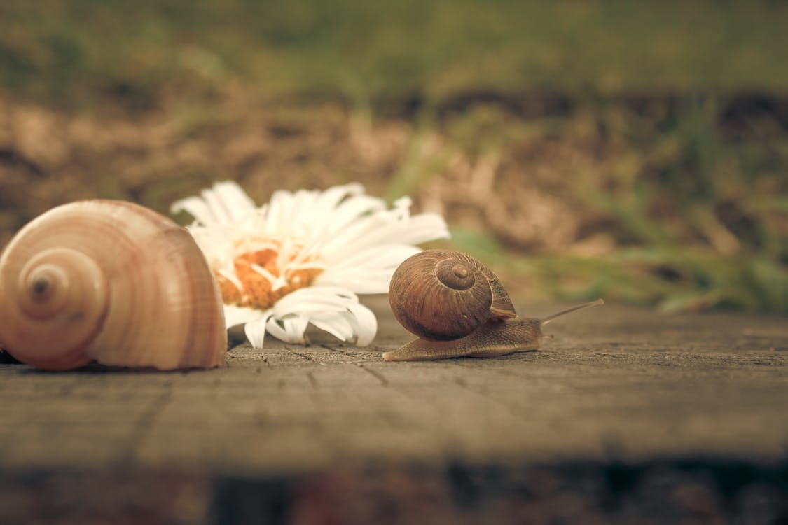 Brown Snails on Top of Brown Wooden Surface