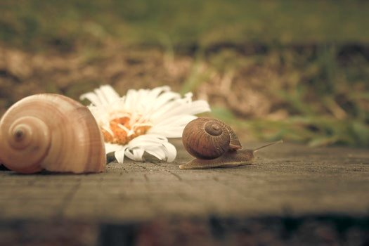 Free stock photo of flower, snail, macro, spiral