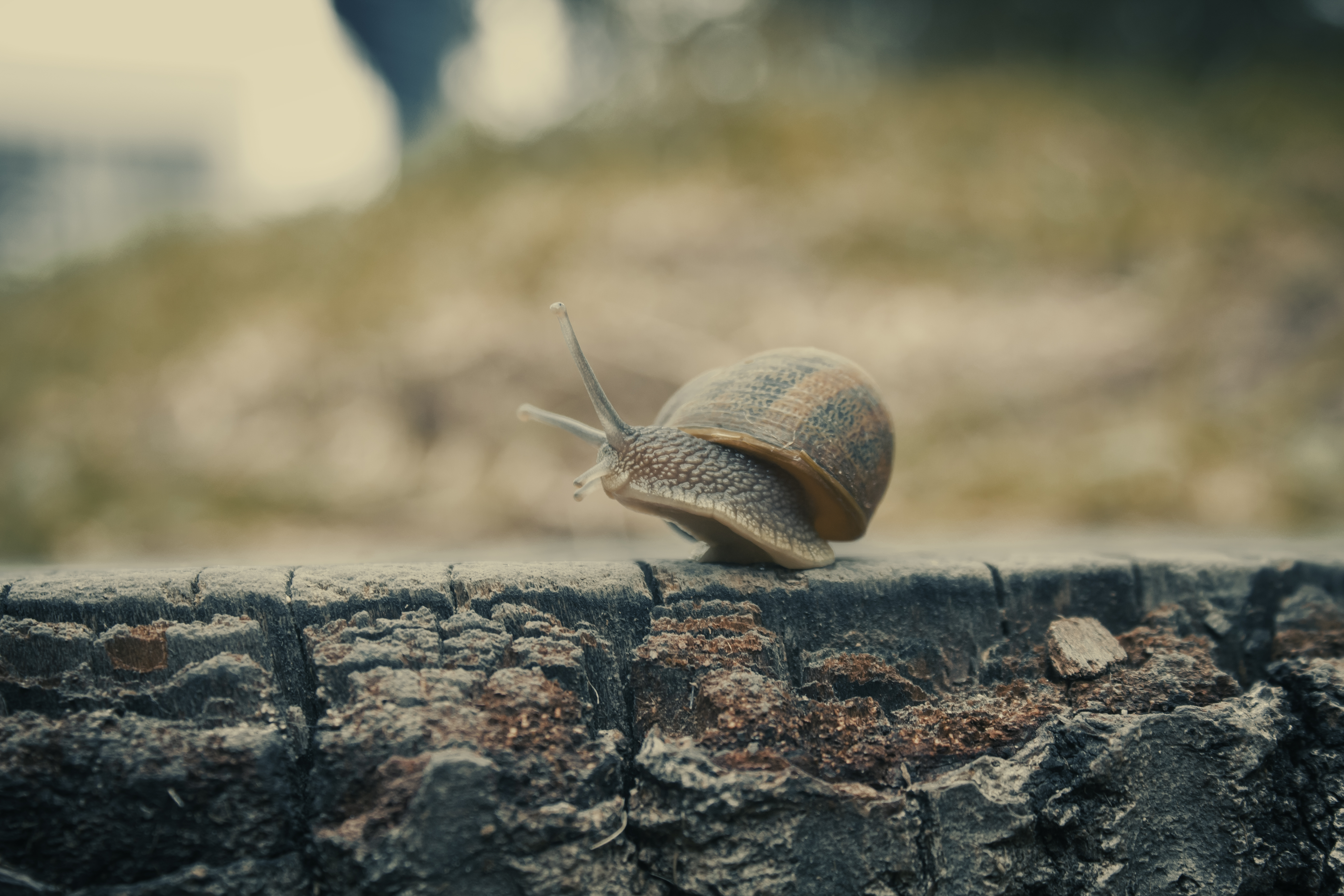 Brown Snail on Gray Concrete Surface
