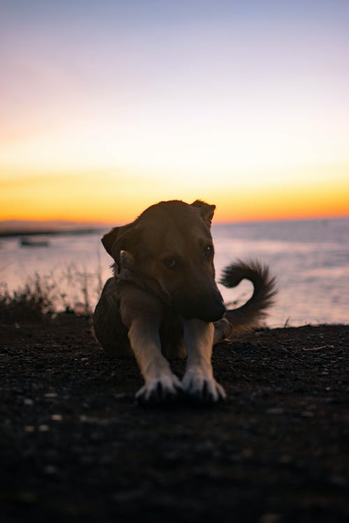 Brown Short Coated Dog Lying on Ground during Sunset