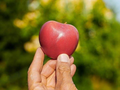 Gratis lagerfoto af Apple, farve, frugt, hånd