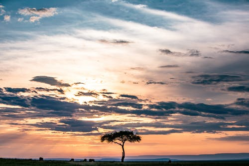 Lonely tree under sunset sky