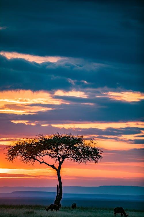 Magnificent sunset sky over vast green savanna