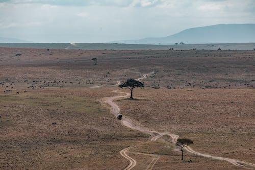 Roadway among field in savanna in daytime