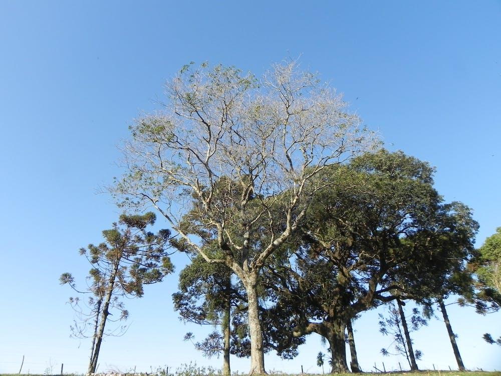 Free stock photo of blue sky, farm, green