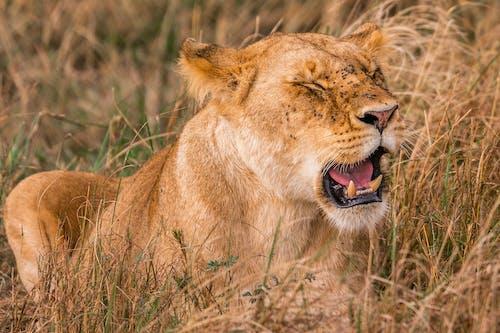 Foto profissional grátis de agressivo, ameaça, animais selvagens