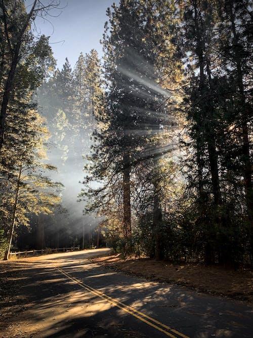 가지, 경로, 경치의 무료 스톡 사진