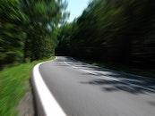 road, trees, shadows