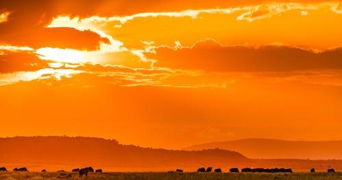 Kostenloses Stock Foto zu afrika, atemberaubend, aussicht
