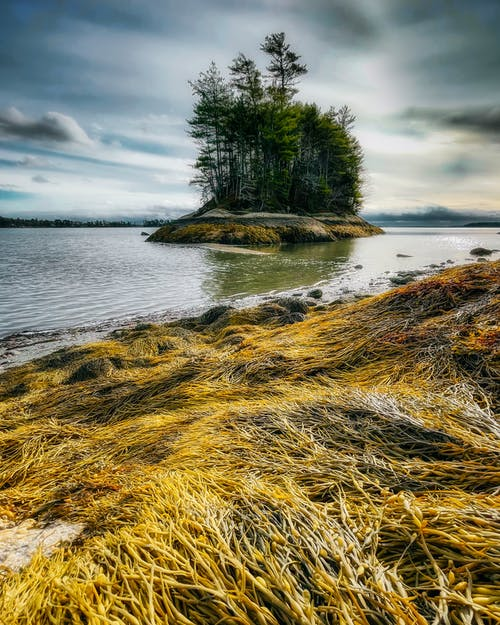 Grass growing on coast of lake with island washed by rippling water under cloudy sky