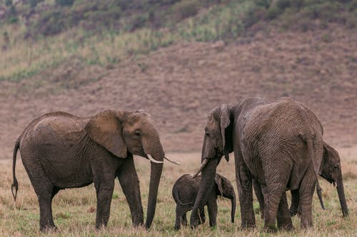 Elephants standing near hill in savanna