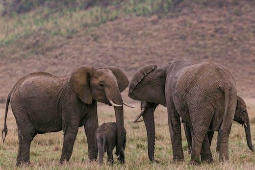 Elephants gathering near green hill