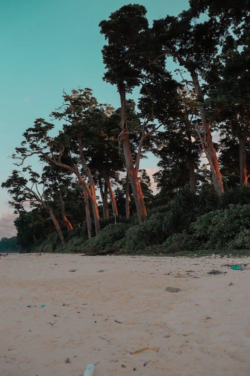 Gratis arkivbilde med dagslys, ferie, hav, havkyst