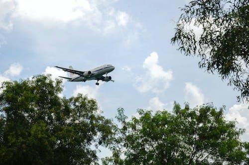 Free stock photo of plane, sky