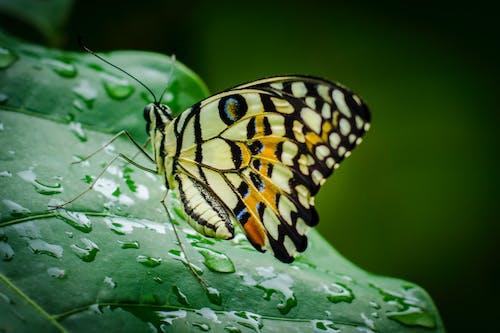 Free stock photo of butterfly, rain drop