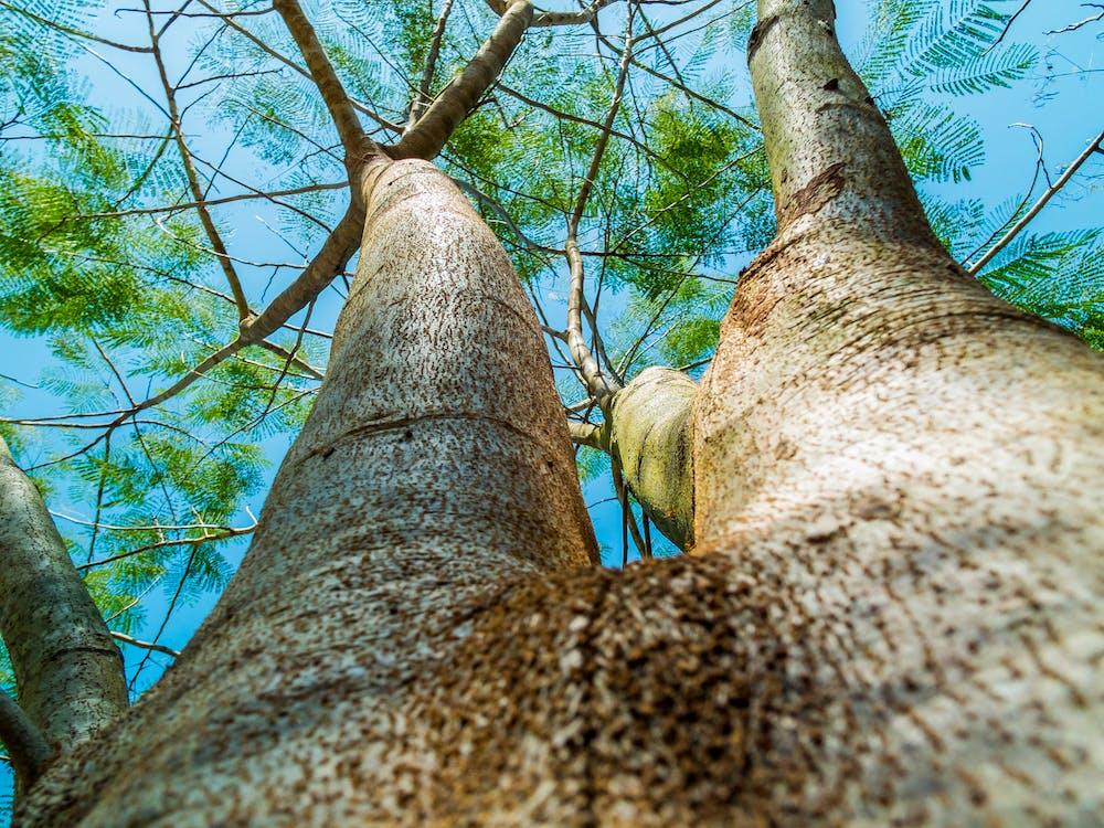 дерево, завод, Кора