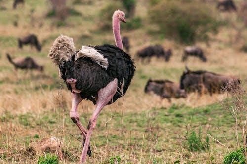 Foto d'estoc gratuïta de animal, au, d'esquena
