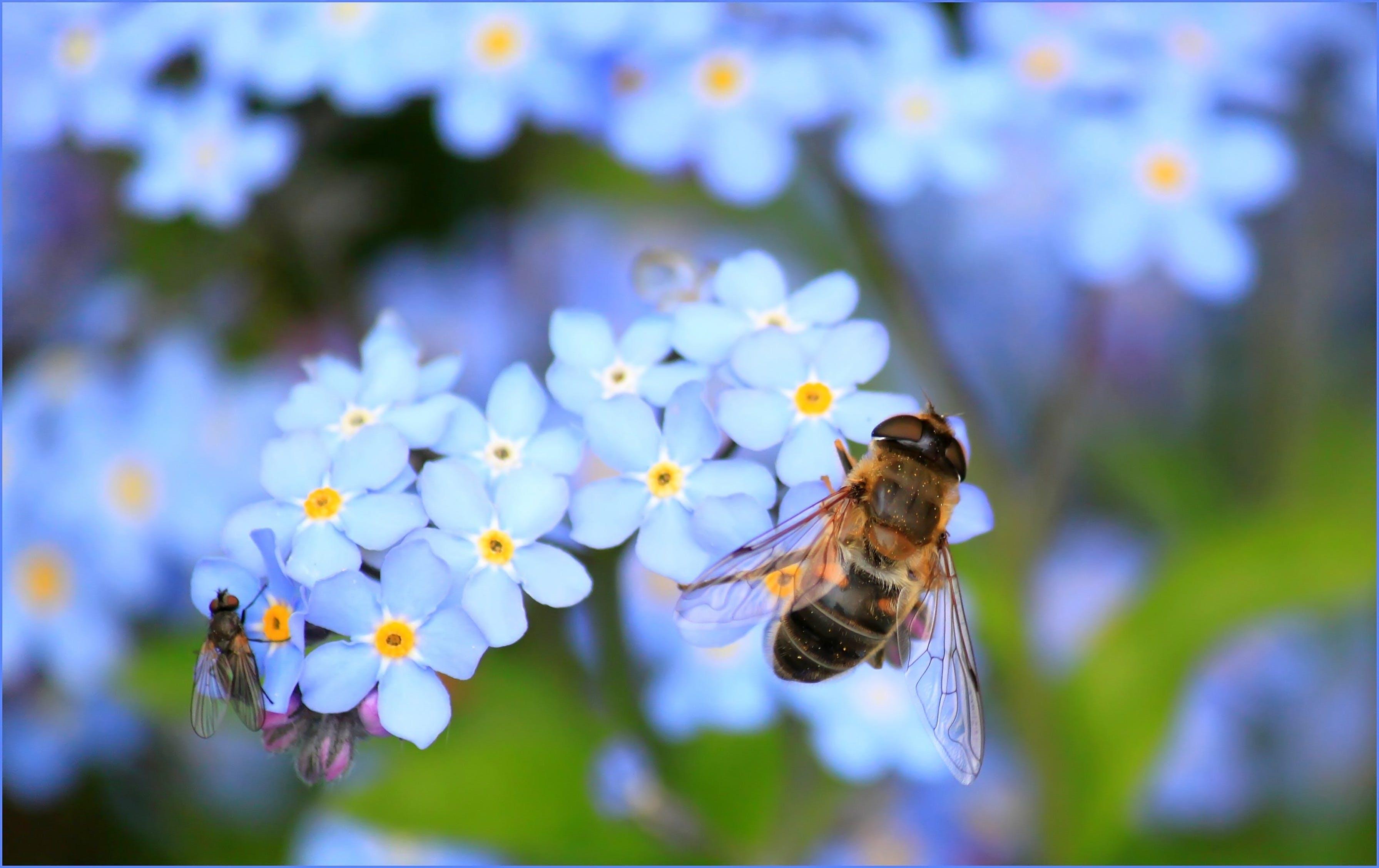 Kostenloses Stock Foto zu natur, blumen, pflanze, biene