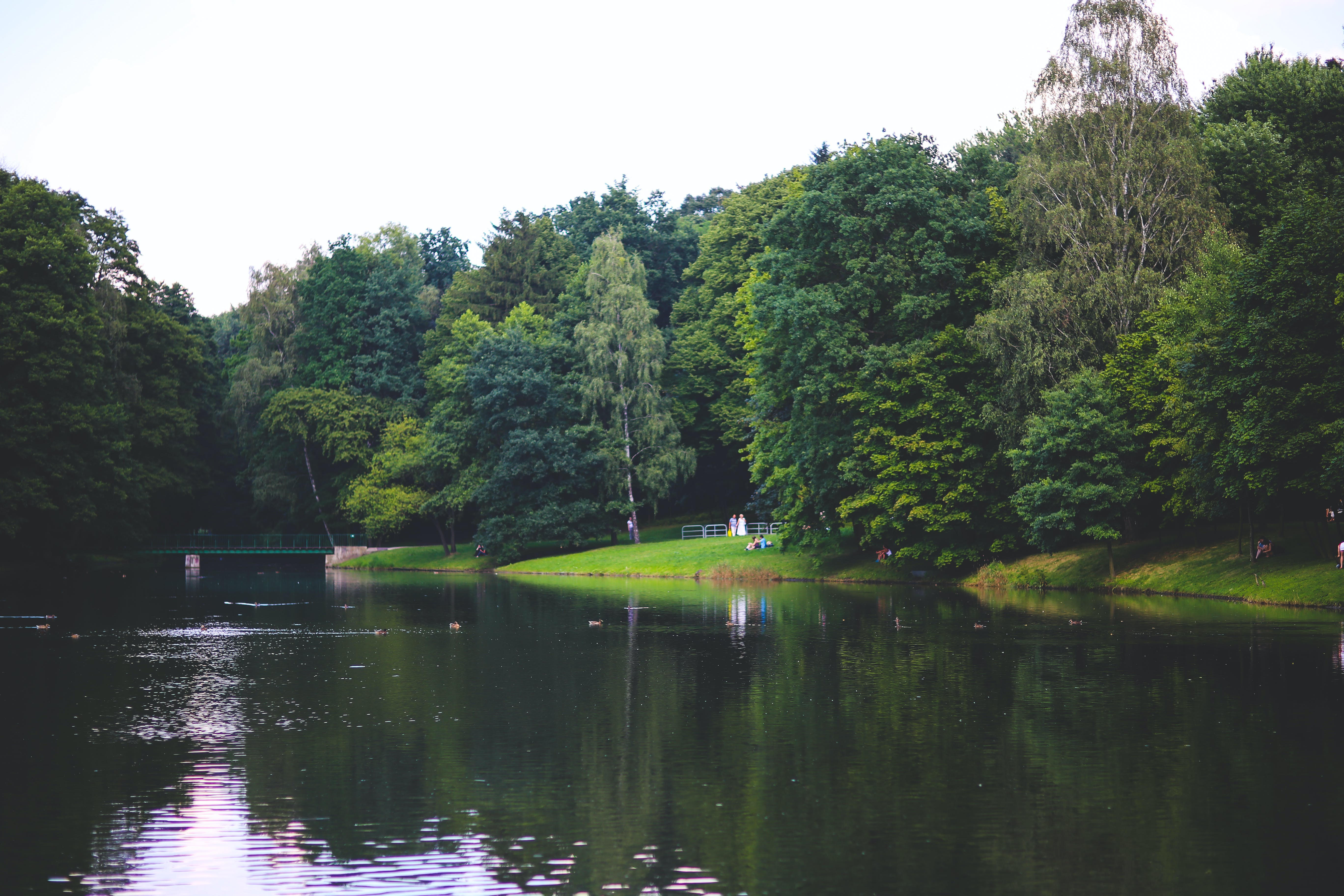 The river in the park