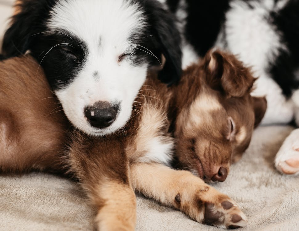 Cute puppies resting together on plaid