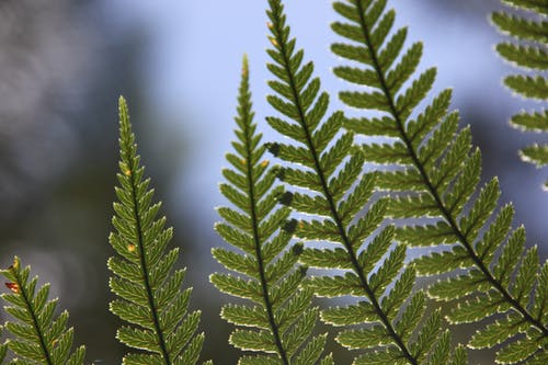 Free stock photo of fern leaves