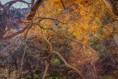 Free stock photo of america, ancient, arizona, autumn